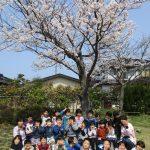 幸町公園の桜❀